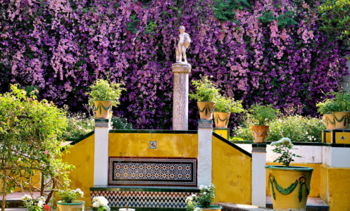 cadiz flowers